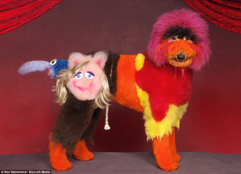 Photographer crosses America to record the weird and woolly winners of dog grooming pageants  5