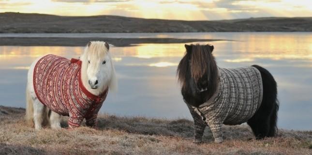 poneyecosse-met-des-pulls-a-ses-poneys-pour-doper-le-tourisme