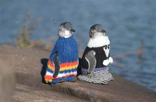 penguins-wearing-sweaters