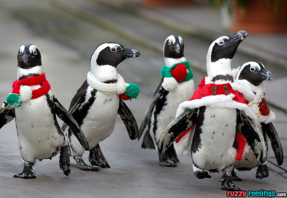 ChristmasPenguins