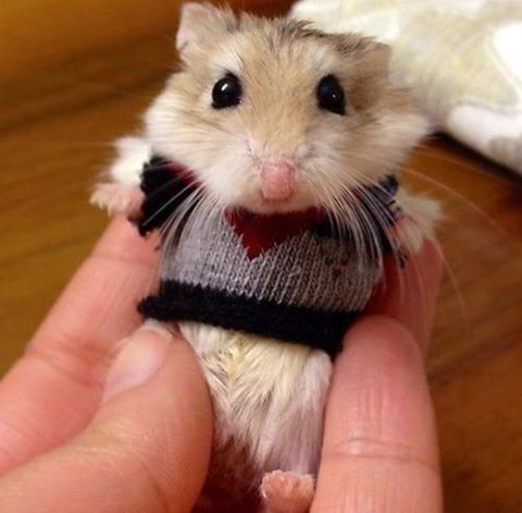 lapin-hamster7KpKru