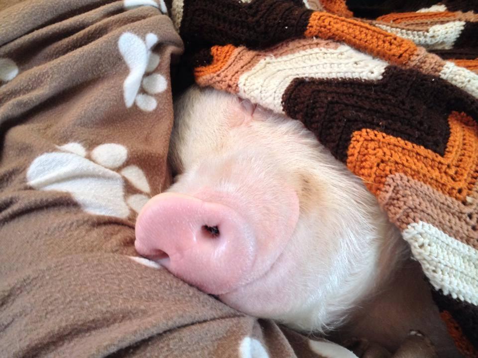 se cacher sous les couvertures