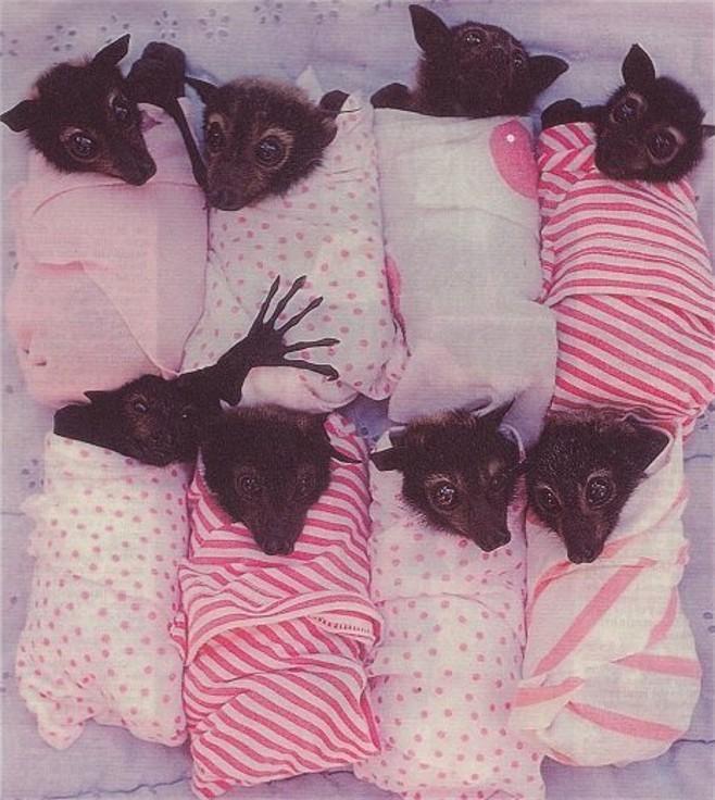 babybats0