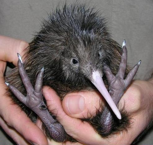 cute-kiwi-feets