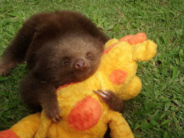 sloth-hugs-plush-toy-big