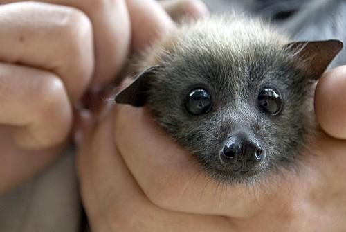 get-bats-out-baby-bat