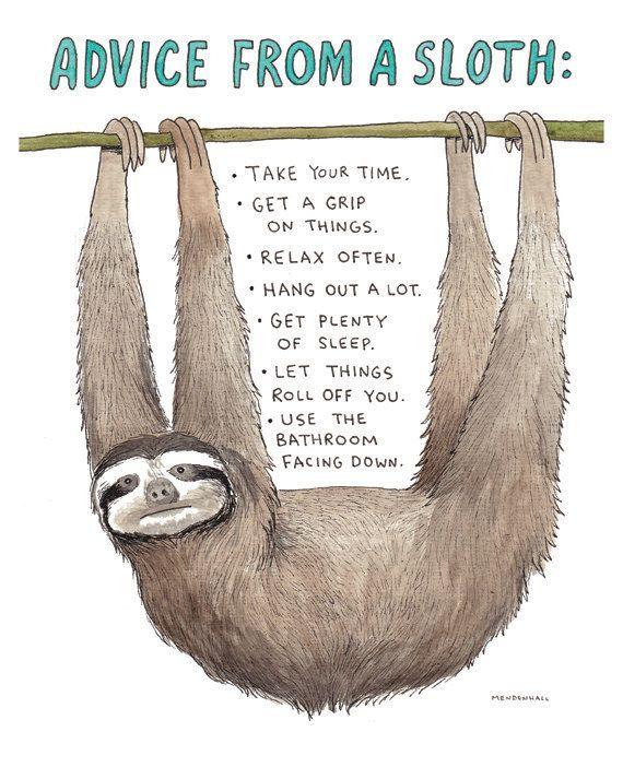 b709ea3ff293aec25df555cf6683eaa3--funny-sloth-a-sloth