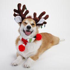 hristmas-pets-christmas-cards