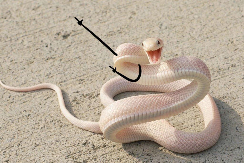 serpent bras
