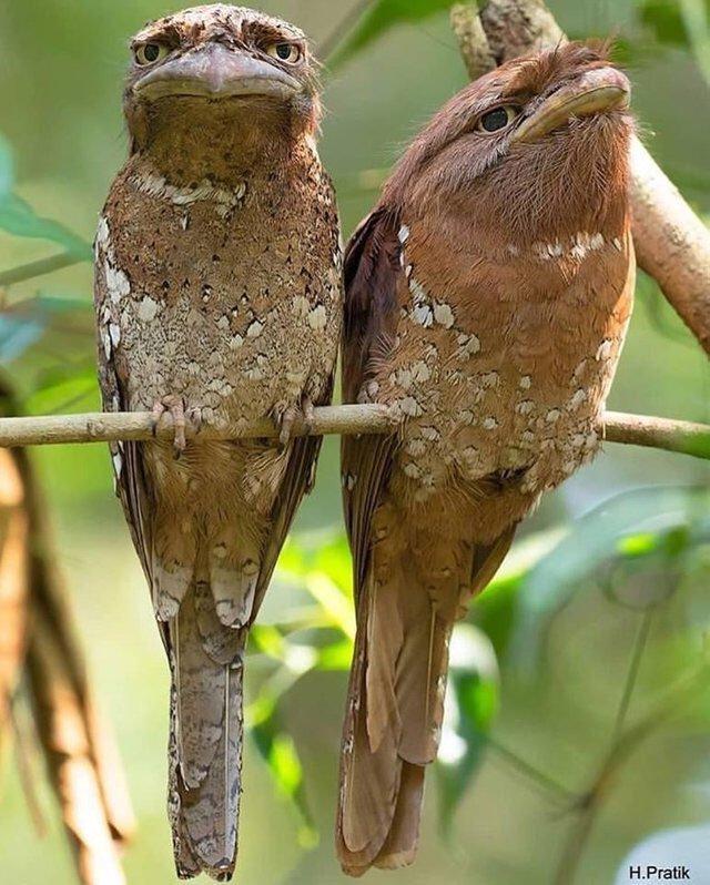 oiseaux dubitatifs