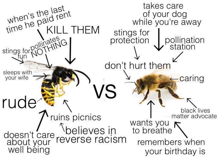 wasp vs bees
